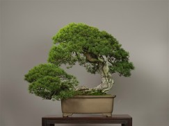 Photo : Omiya Bonsai Art Museum5
