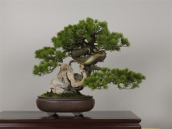 Photo : Omiya Bonsai Art Museum6