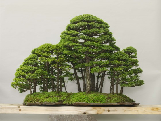 Photo : Omiya Bonsai Art Museum7